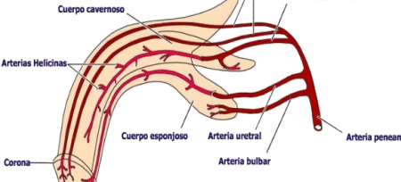 uretritis y disfunción eréctil
